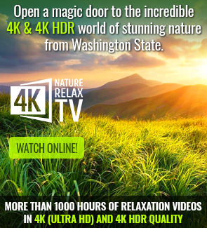4K Relax TV streaming video service