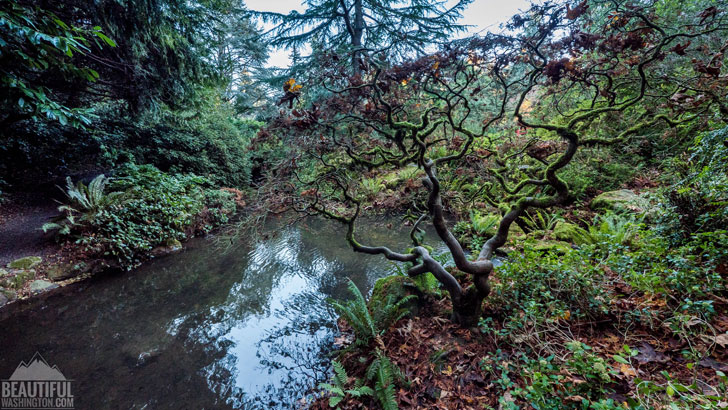 Photo from King County, Seattle, Kubota Garden
