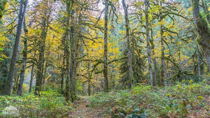 Photo of the Baker River Trail, taken in autumn, North Cascades Region