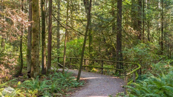 Photo taken at Bridle Trails State Park, King County, Eastside