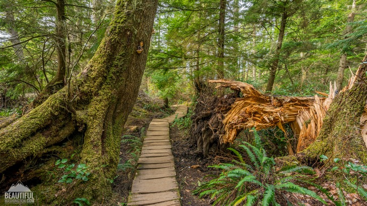Photo from Cape Flattery Trail, Coast of the Olympic Peninsula