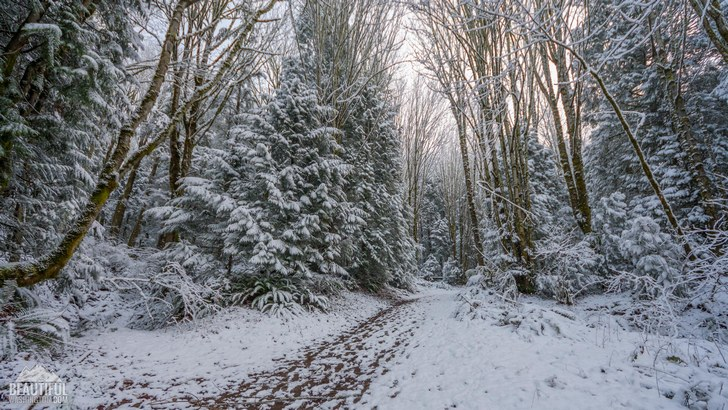 Coal Creek Falls Trail