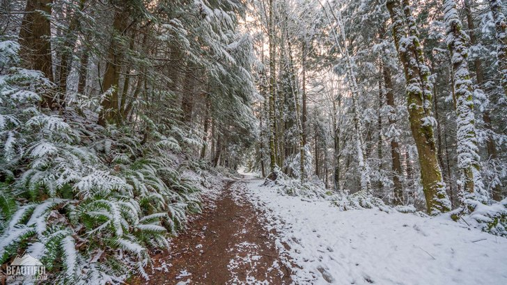 Winter beauty of Coal Creek Falls Trail, King County, Cougar Mountain Regional Wildland Park