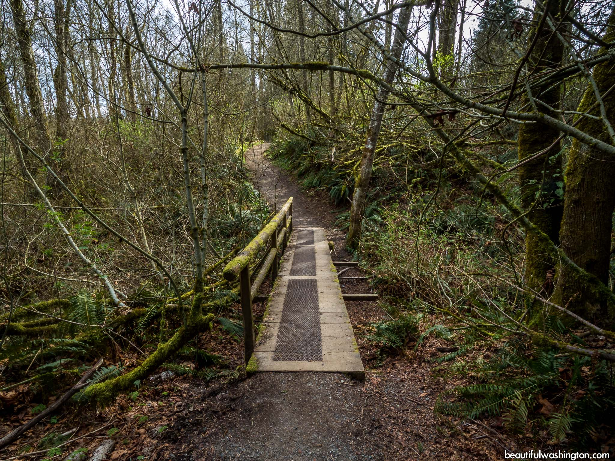 Photo from King County, Issaquah, Wildside Trail - De Leo Wall Trail