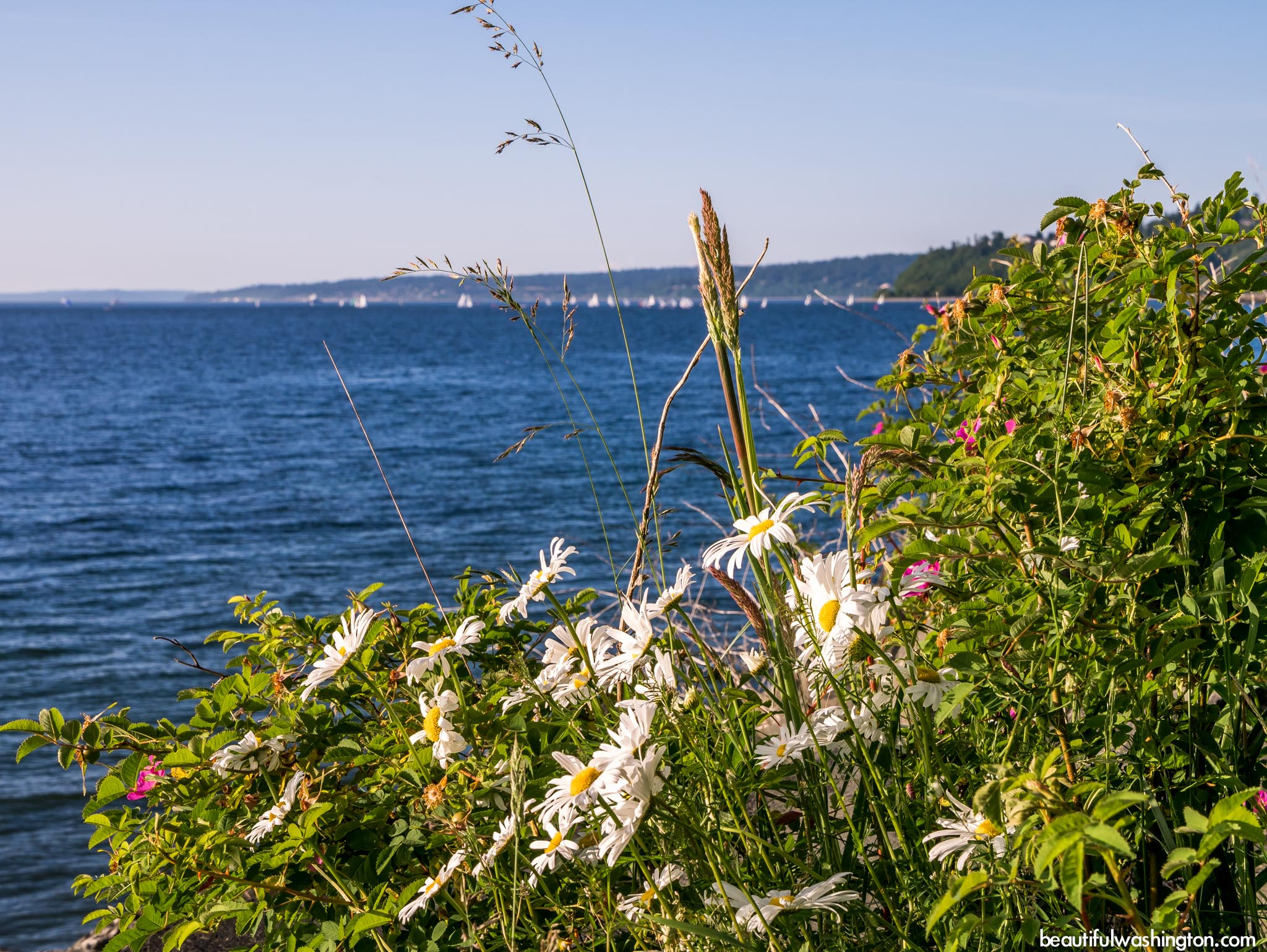 Photo from King County, Seattle, Discovery Park
