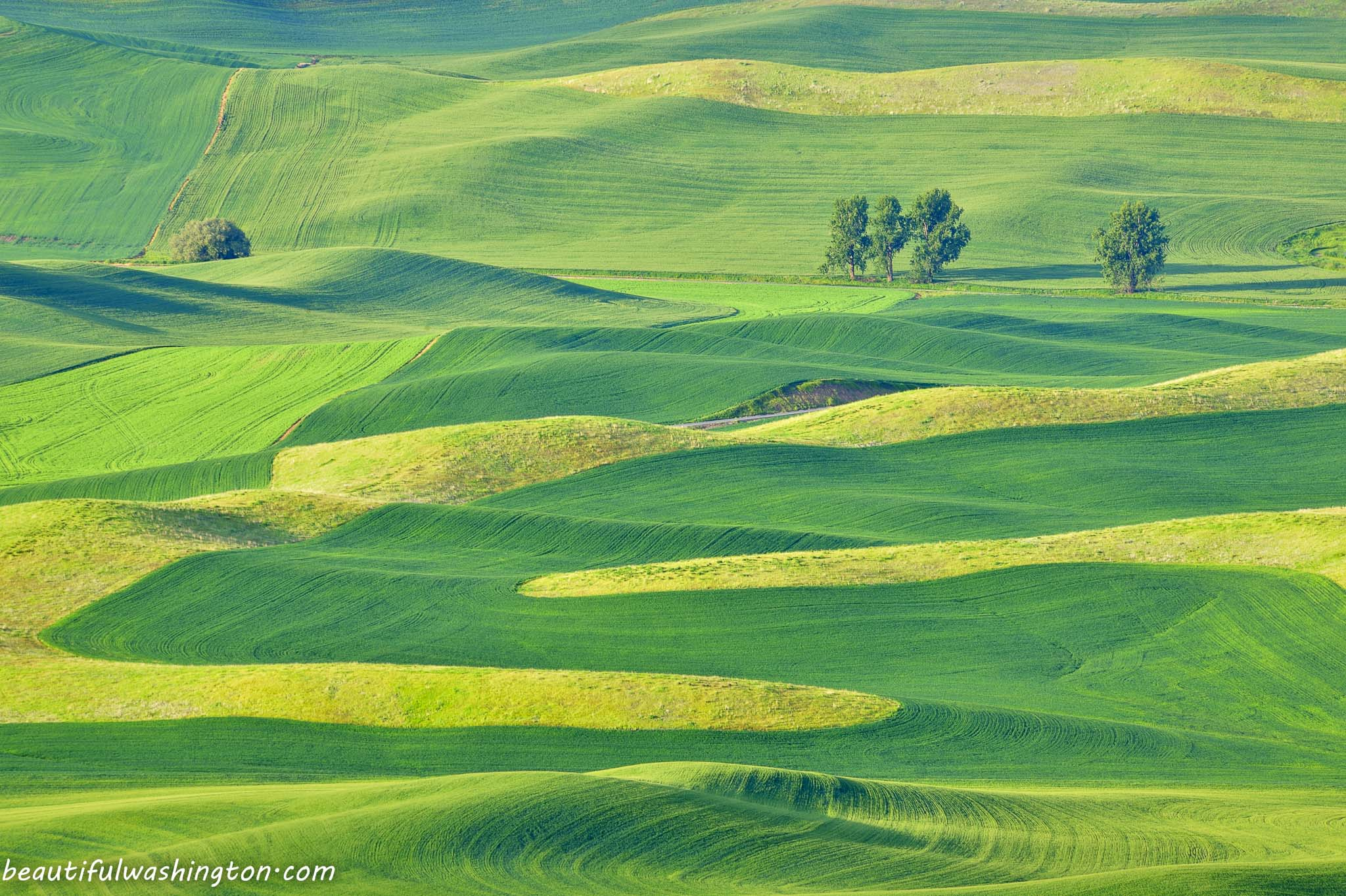 Palouse fields Carolina K Smith 02