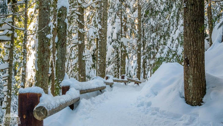 Winter beauty of the Franklin Falls Trail, Snoqualmie Region, North Bend Area