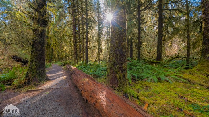 Photo from Olympic National Park, Hoh Rain Forest, Hall Of Mosses Trail