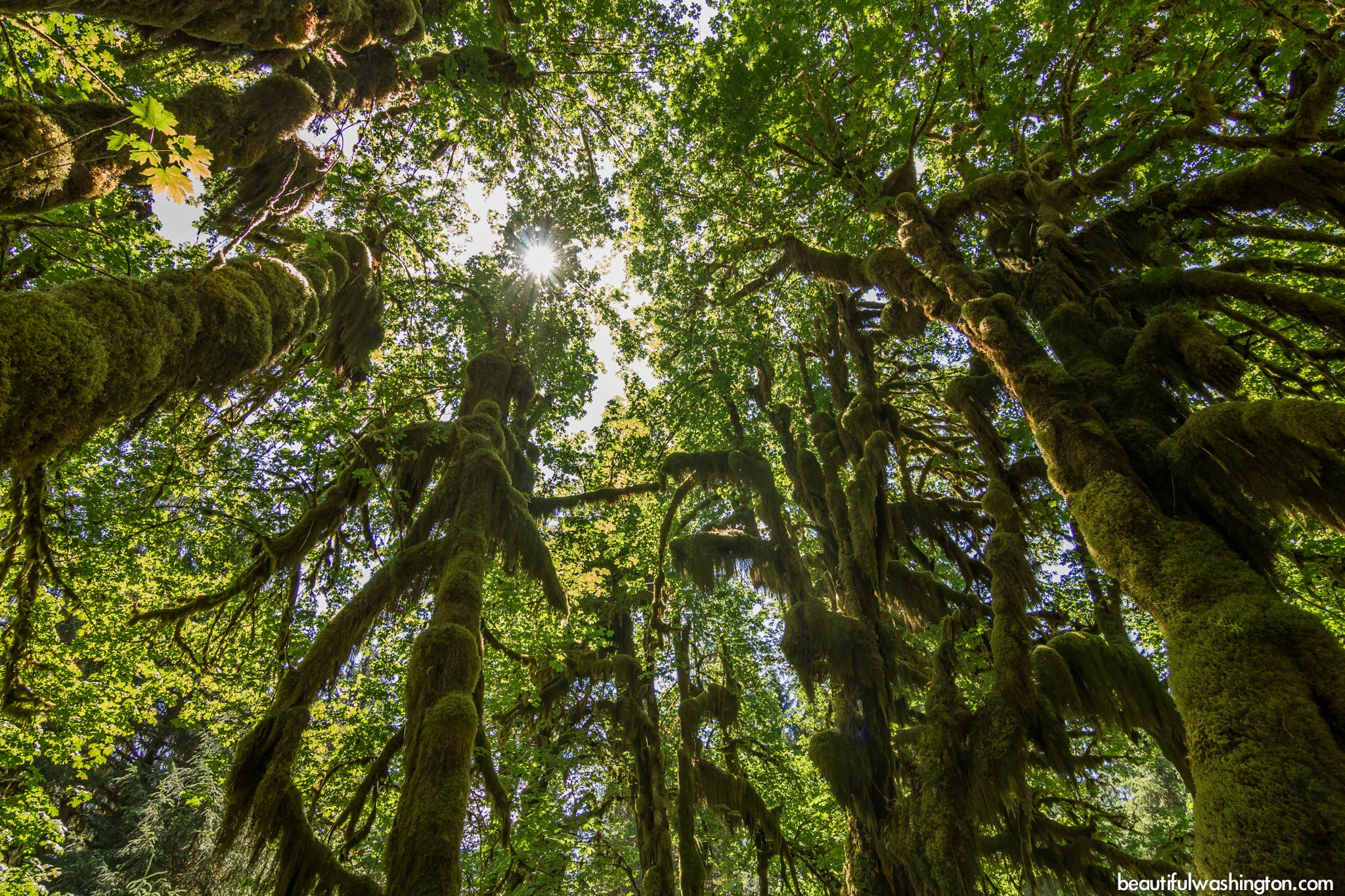 Photo from Olympic Peninsula, Hoh Rain Forest