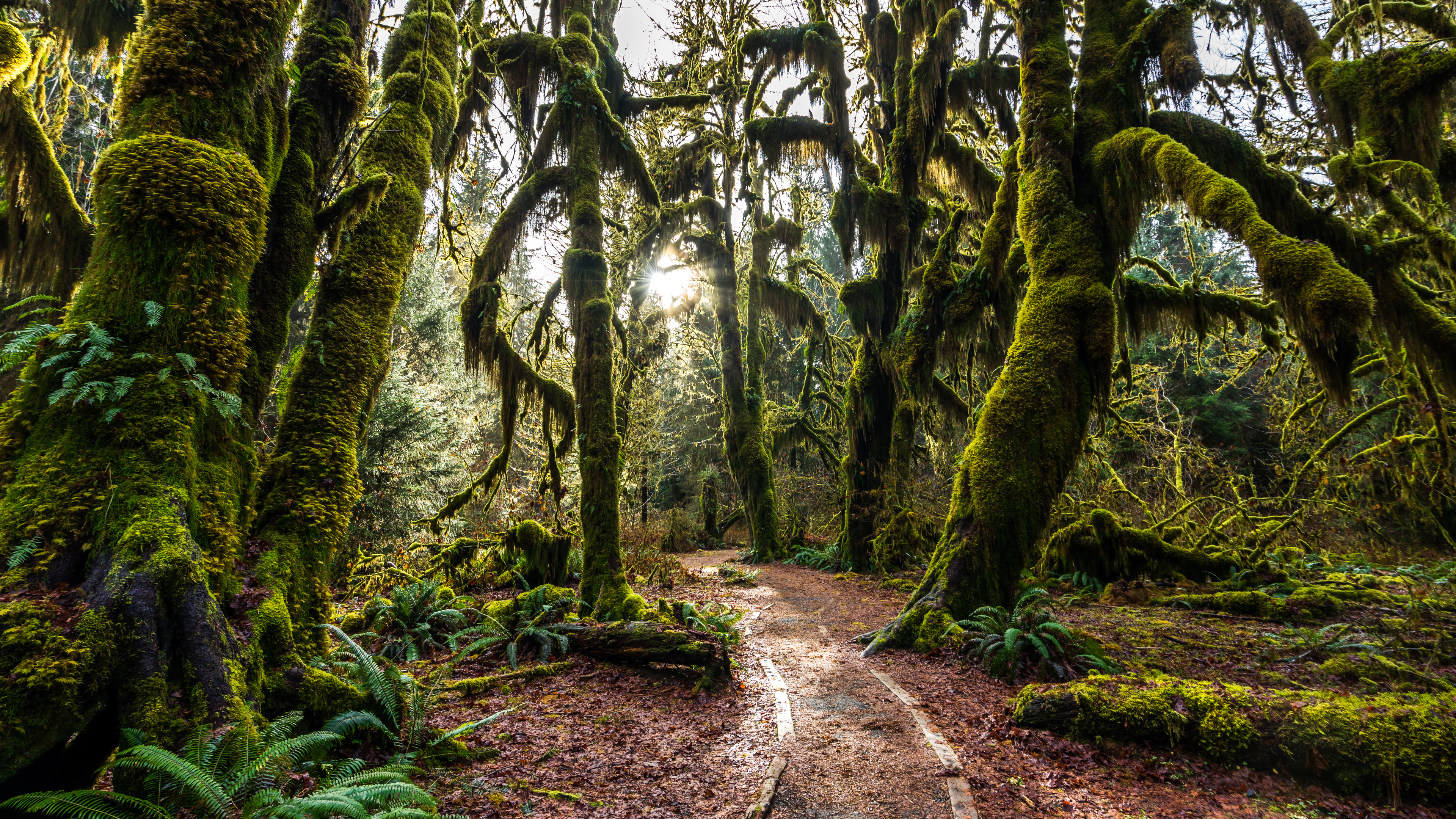 4k Hd Nature Relaxation Video Hoh Rain Forest Part 1 1