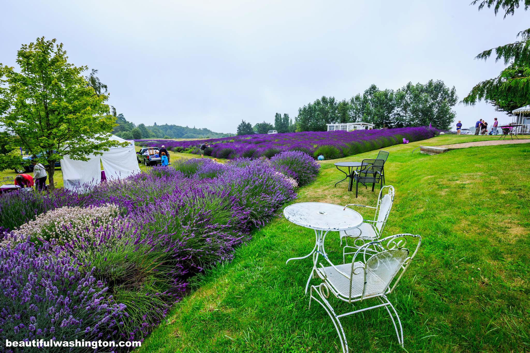 jardin du soleil lavender farm. Black Bedroom Furniture Sets. Home Design Ideas