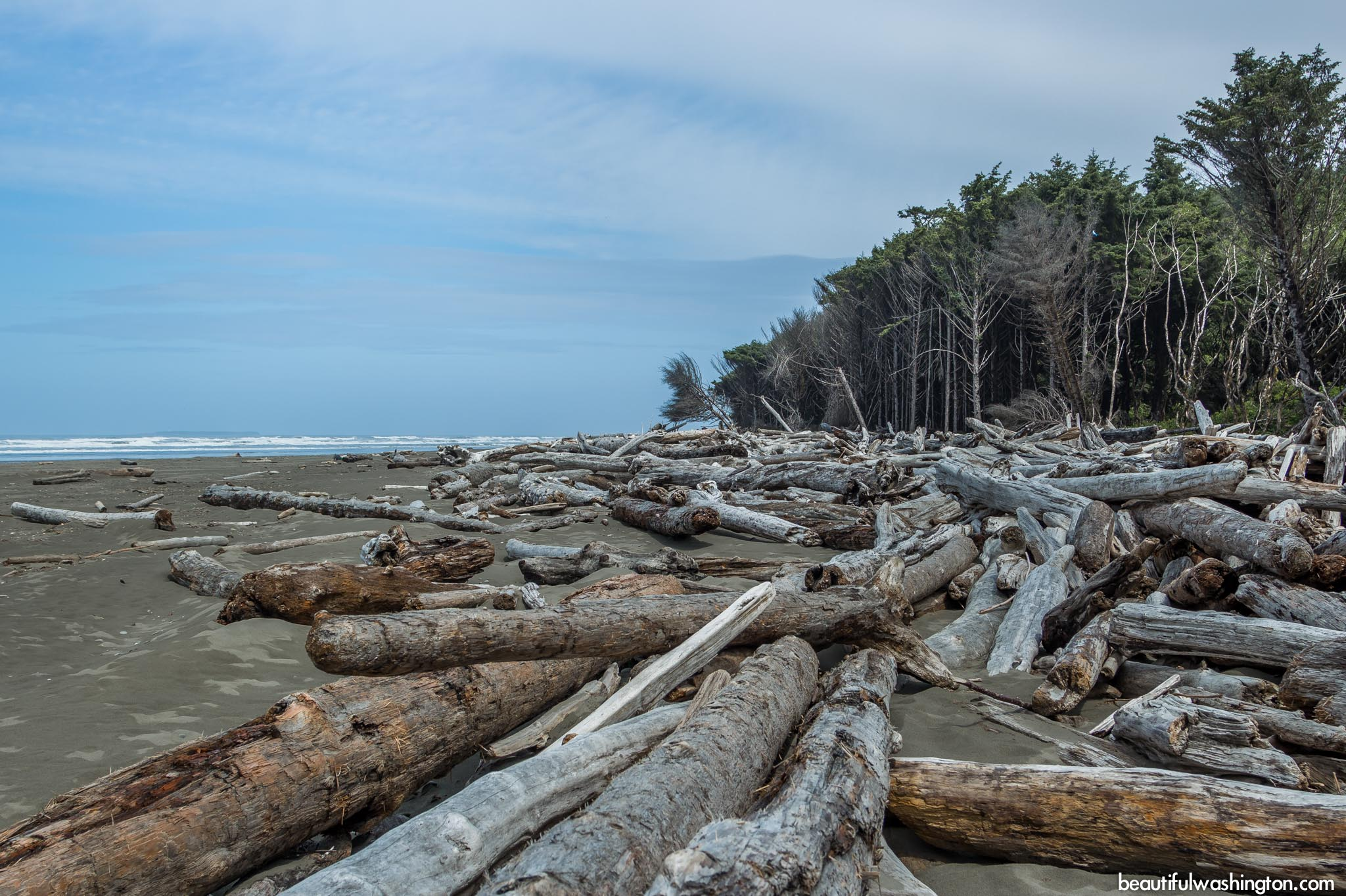 Photo from Olympic Peninsula, Kalaloch Browns Point Trail