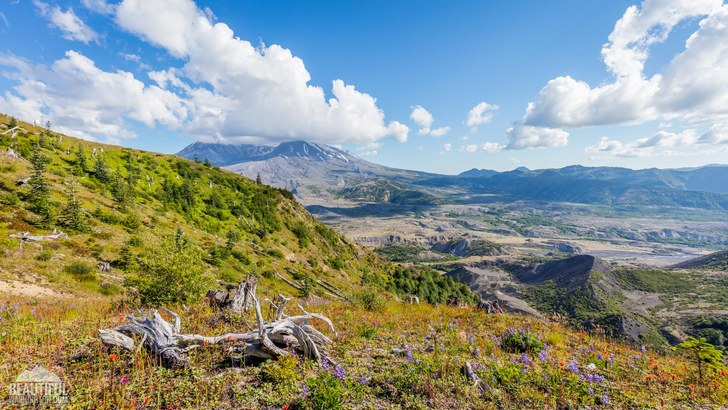 Photo from Loowit Viewpoint, Mount St. Helens Area, South Cascades