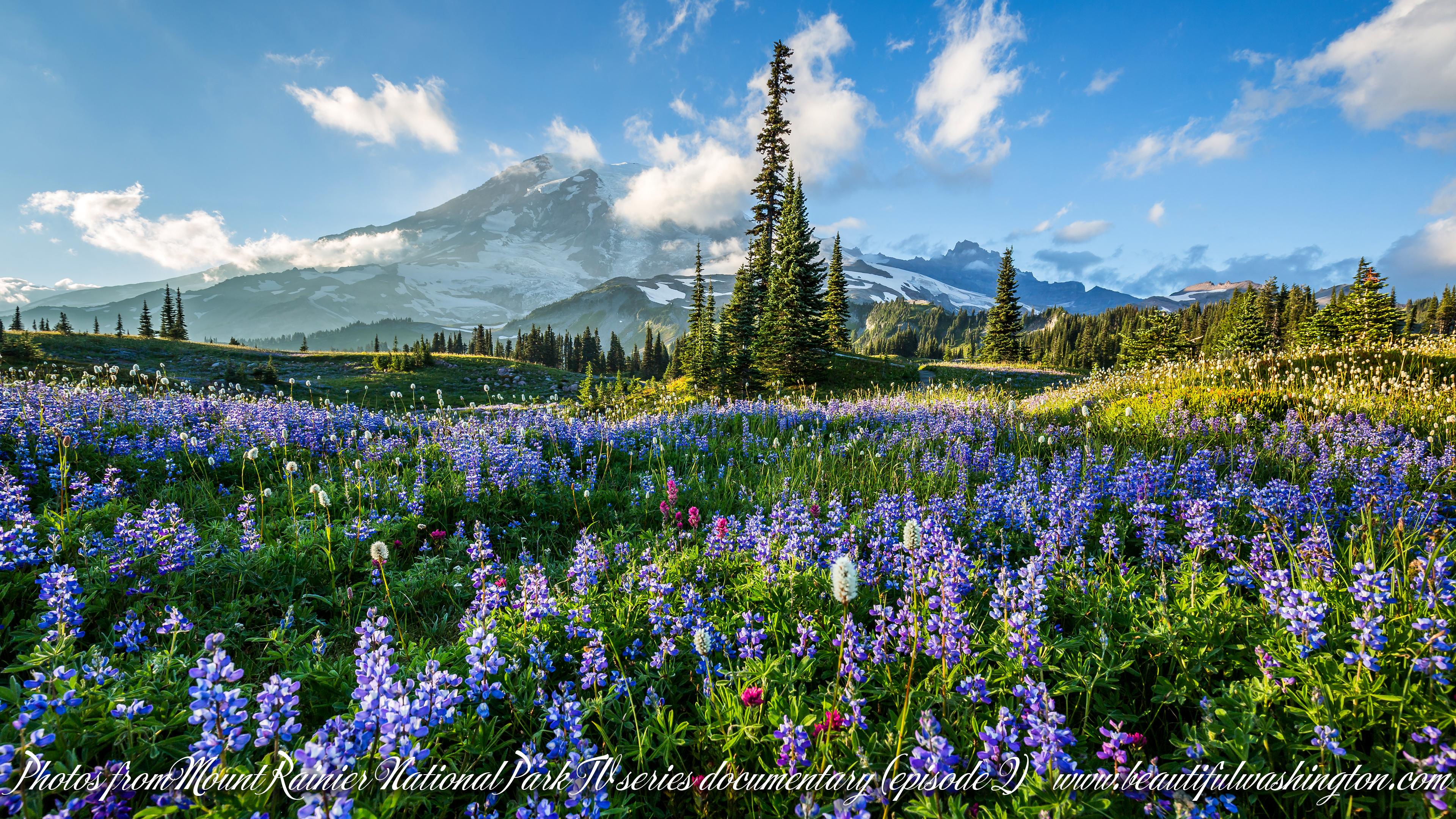Mount Rainier National Park 4k Series Episode 2