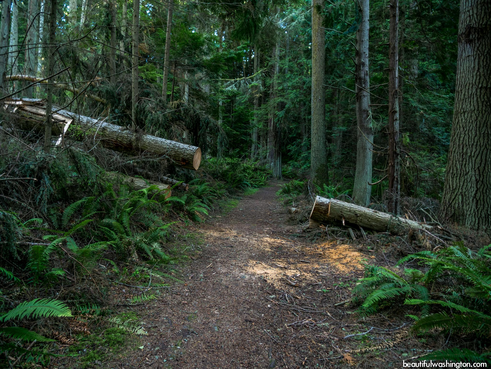 Photo from North Cascades, Friday Harbor, Mount Finlayson Trail