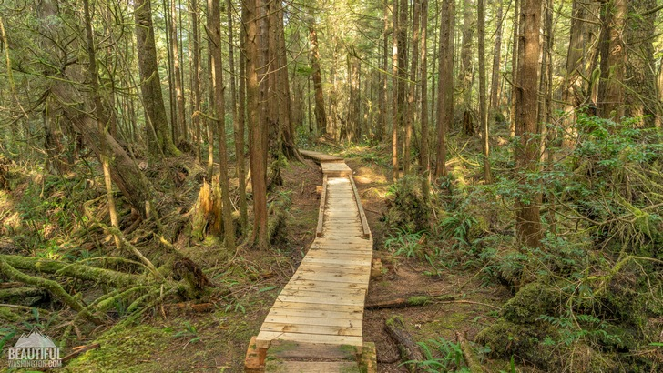 Photo from Ozette Triangle Trail, Olympic Peninsula