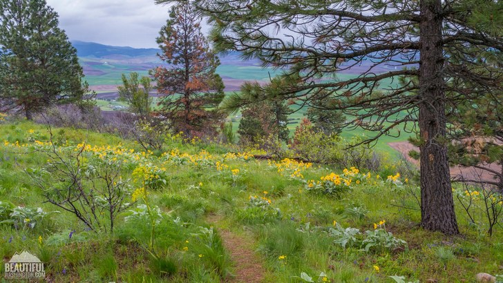 Photo taken at Pine Ridge Trail, Kamiak Butte State Park, Whitman County, Eastern Washington
