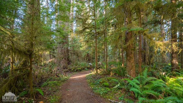 Photo taken at the Quinault Loop Trail, Olympic Peninsula Region