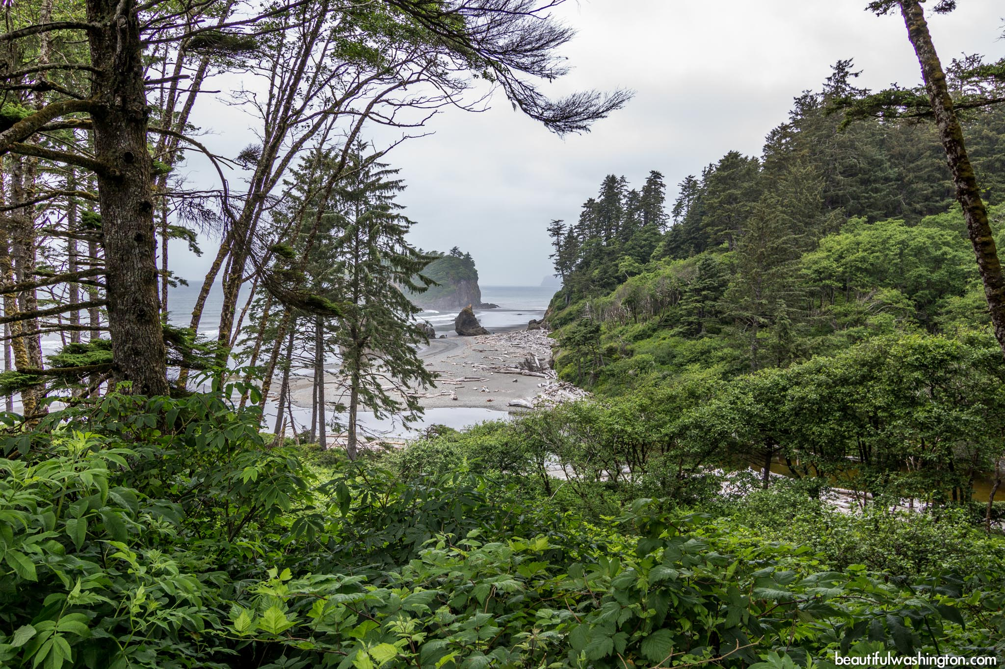 Photo from Olympic Peninsula, Olympic National Park, Ruby Coast