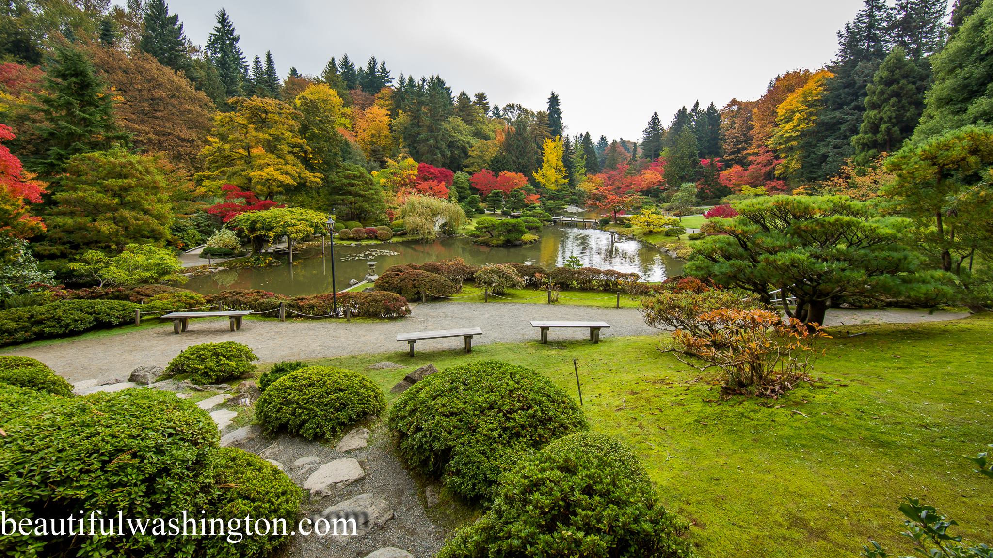 click to enlarge image japanese garden 2jpg seattle japanese gardenin fall seattle seattle japanese gardenin fall seattle - Golden Garden