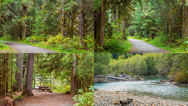 Silver Fir Campground