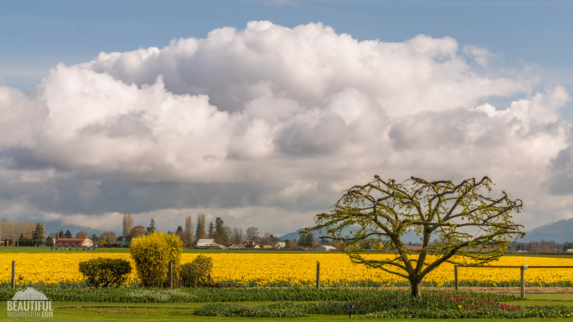 Photo from Skagit Valley