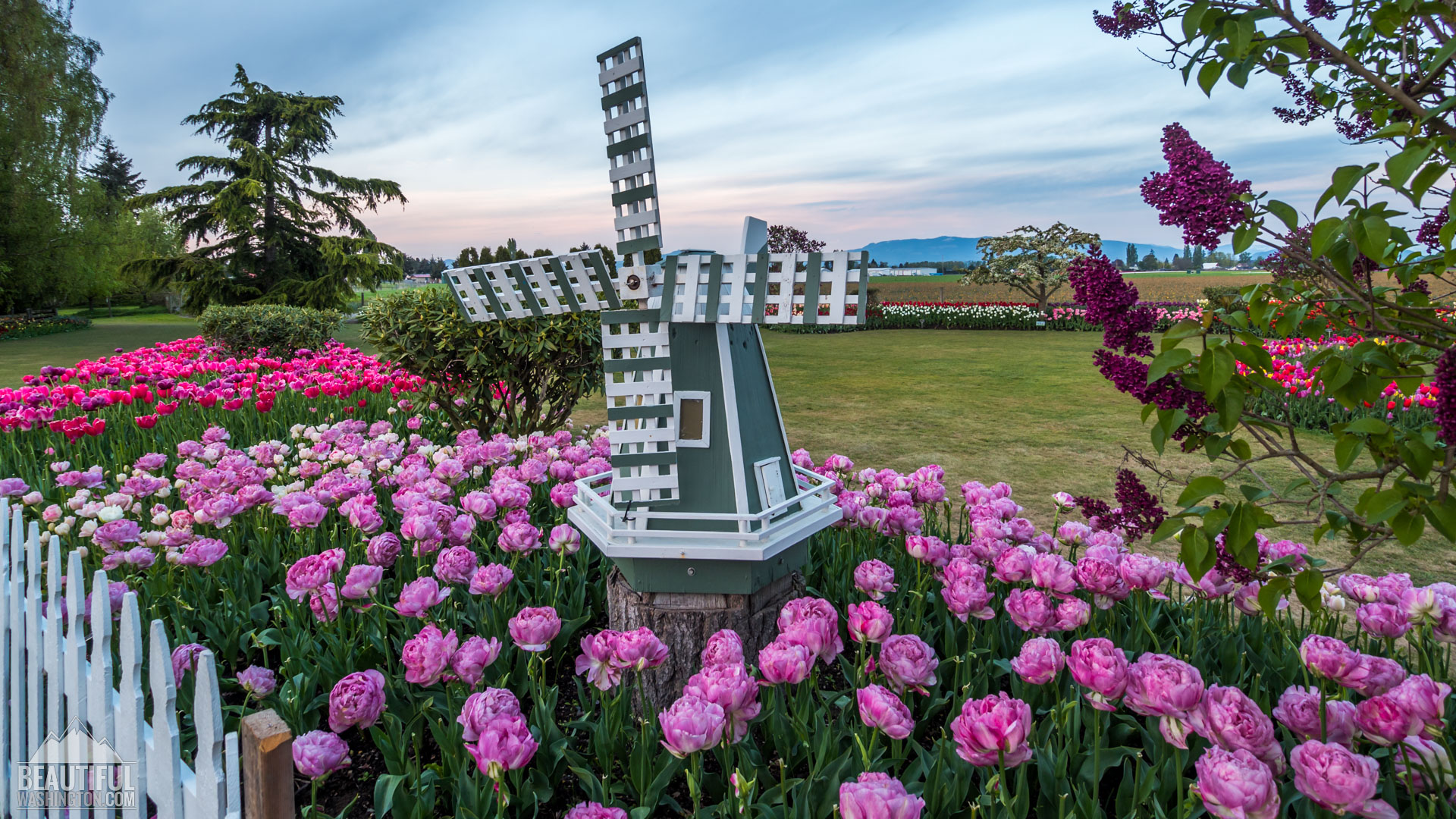 Photo from Skagit Valley Tulip Festival 2016