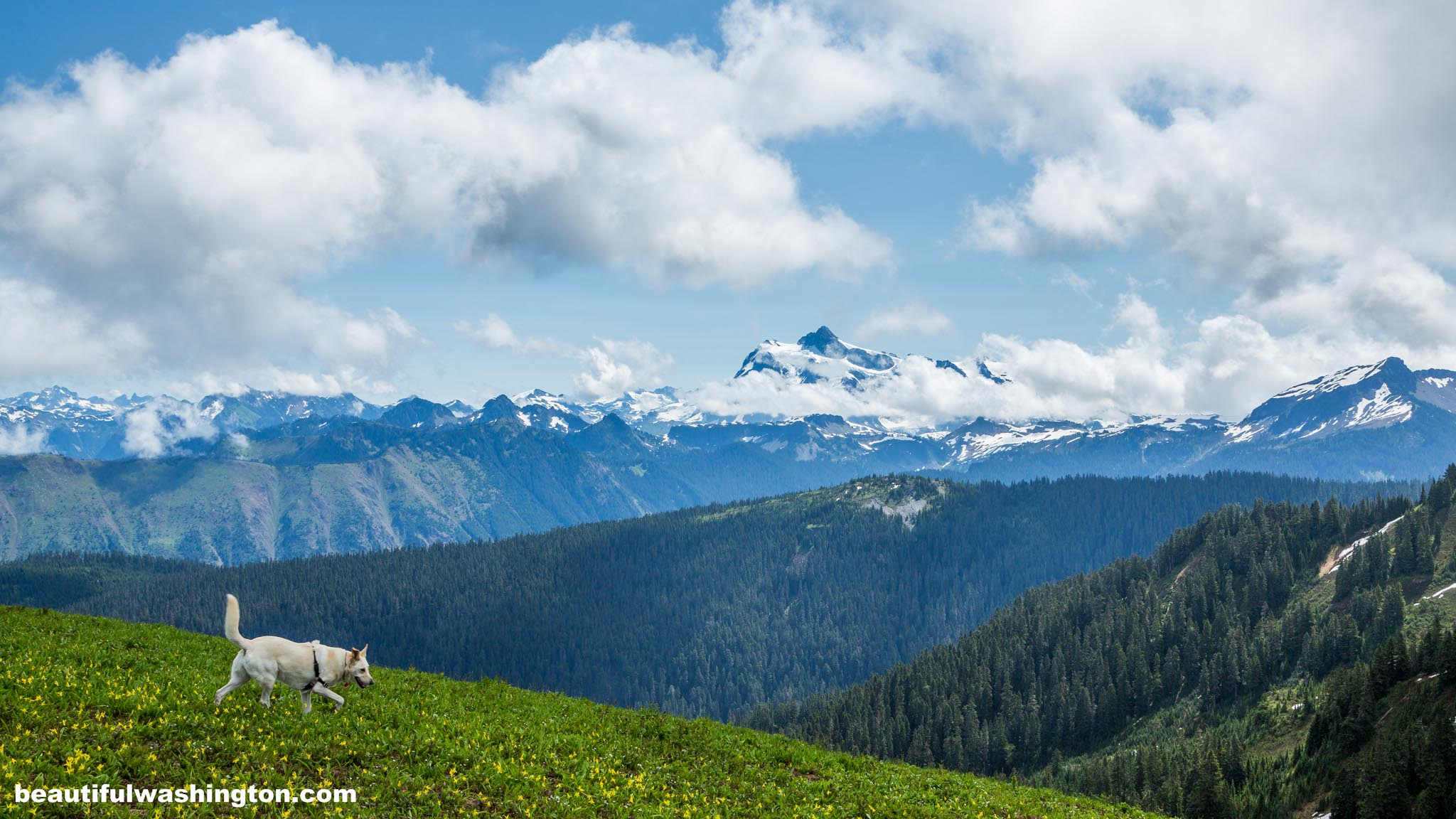 Photo from North Cascades, Mt. Baker Area, Skyline Divide Trail