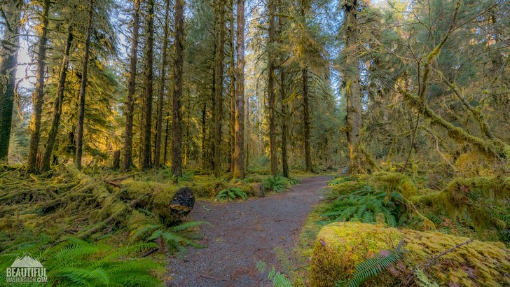 Photo from Olympic National Park, Hoh Rain Forest, Spruce Nature Trail