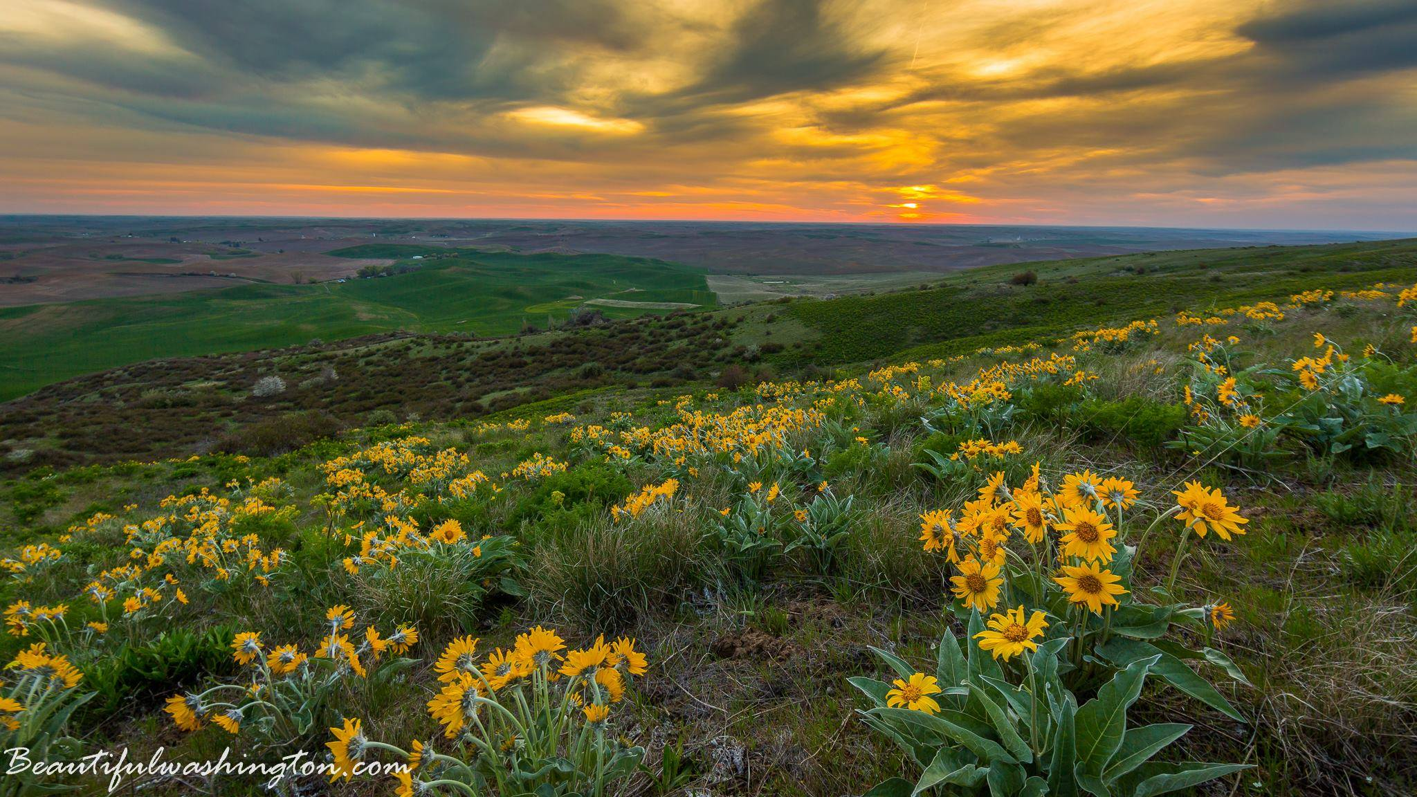Photo from Steptoe Butte State Park