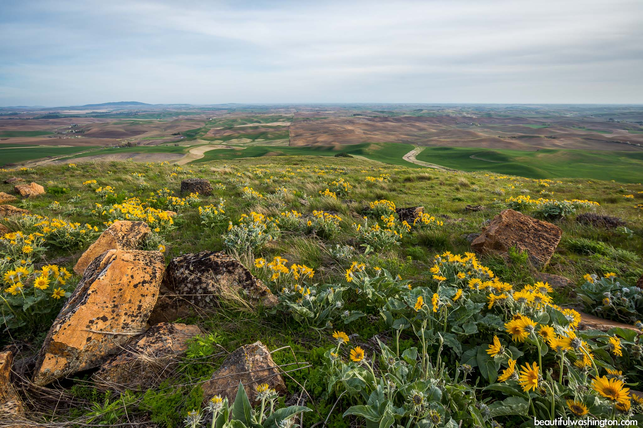 Steptoe Butte State Park 43