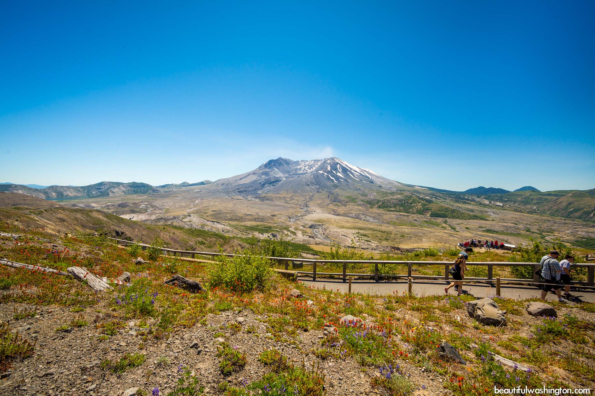 Photo from Mount St. Helens Area, Harry's Ridge Trail