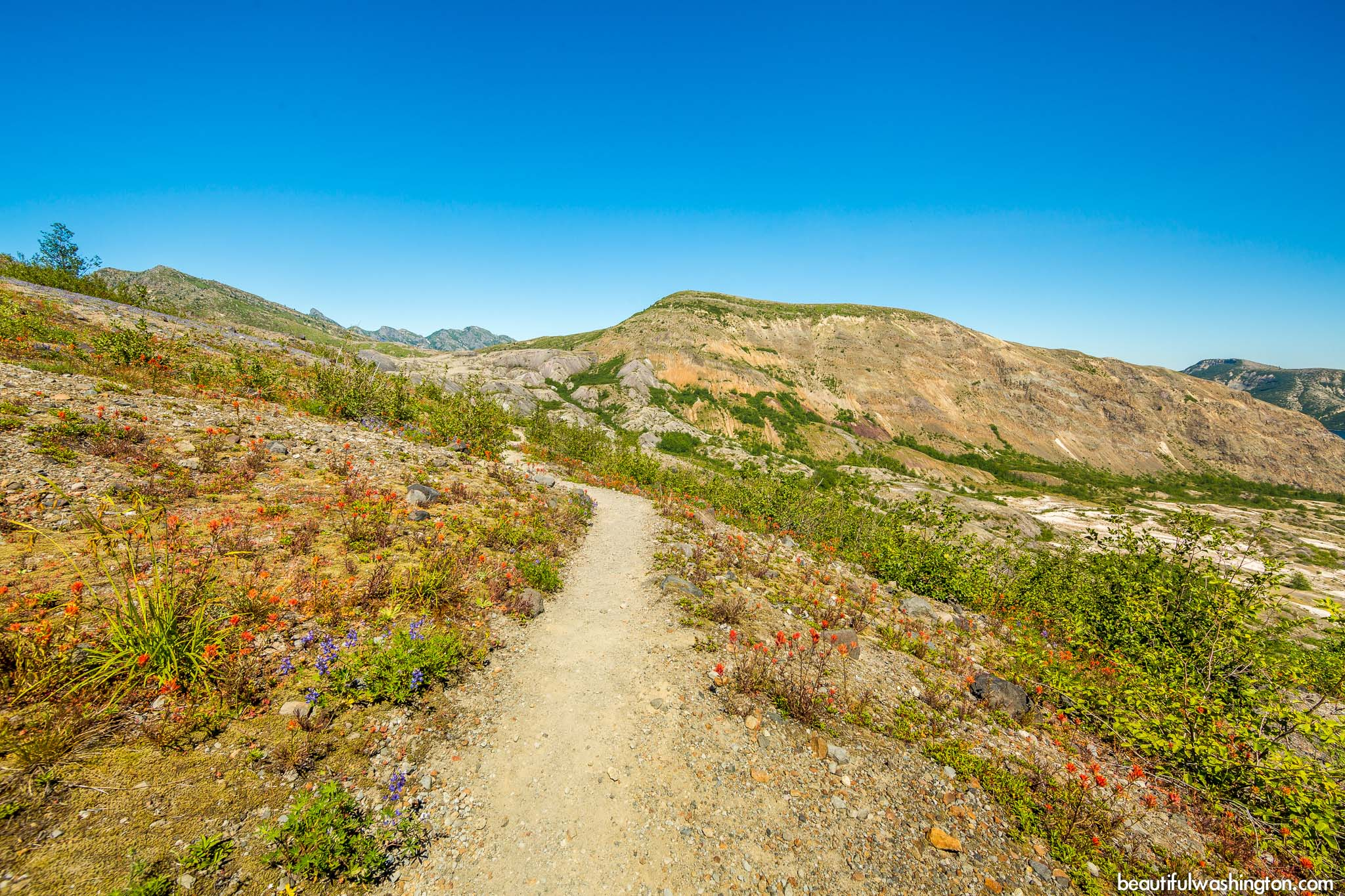Photo from Mt. St. Helens Area, Harry's Ridge Trail