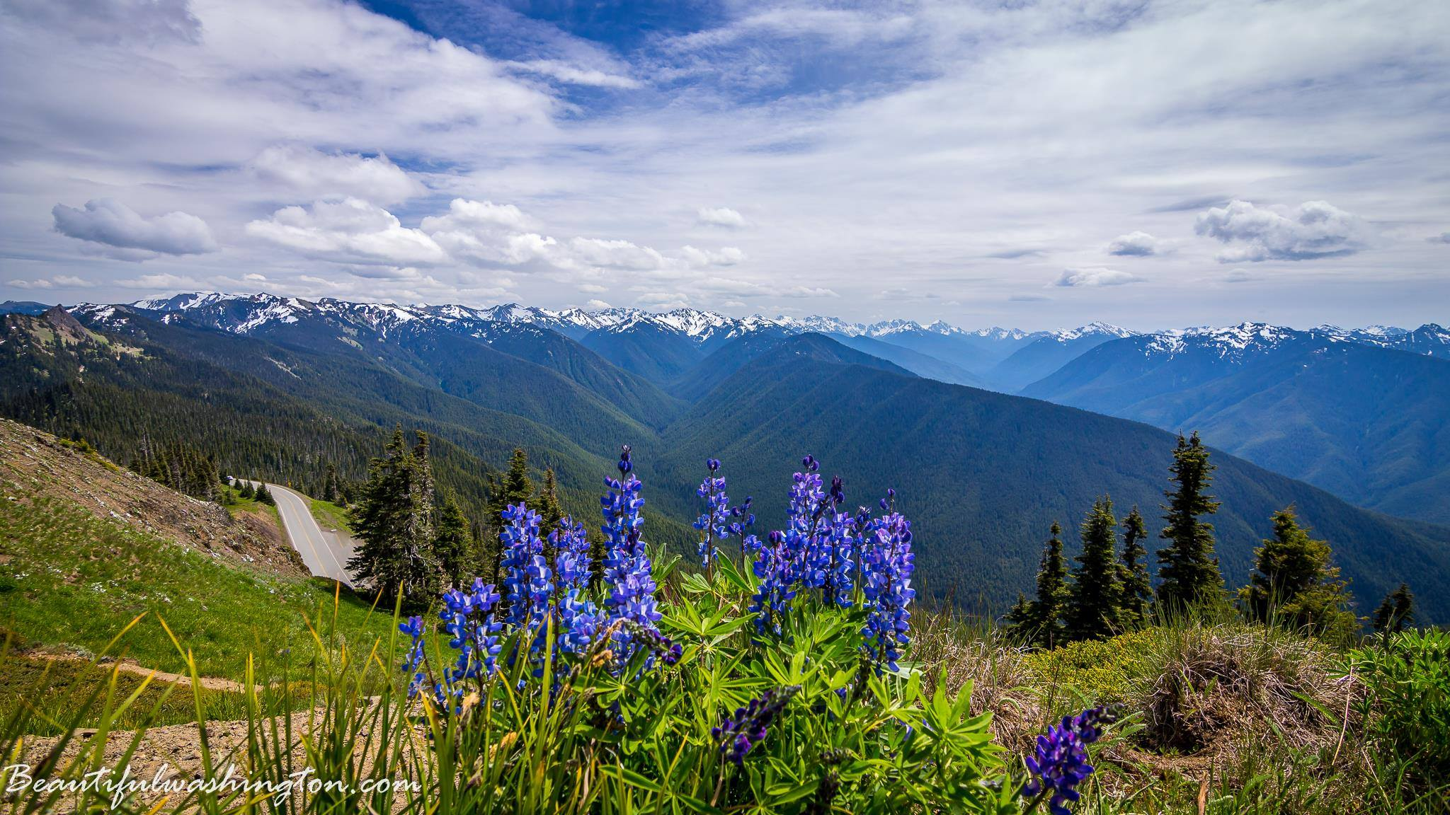 Photo from Hurricane Hill Trail, Olympic National Park