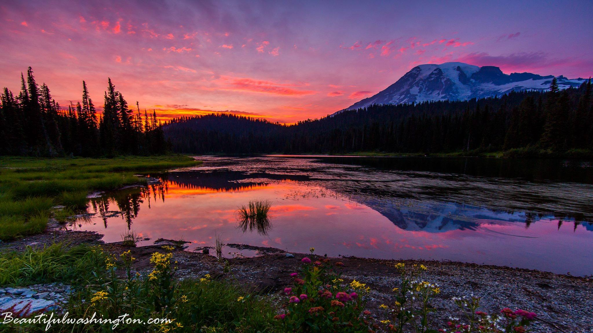 Photo from Mount Rainier National Park