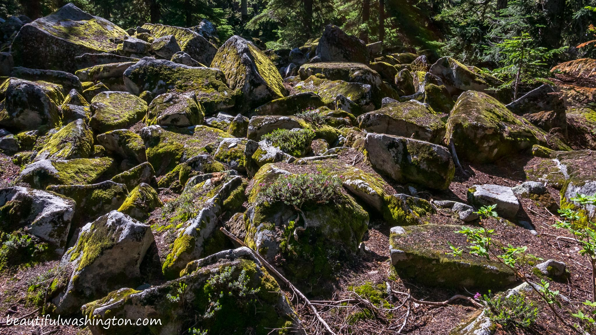 Photo from Central Cascades, Skykomish River Valley, West Fork Foss Lakes Trail,