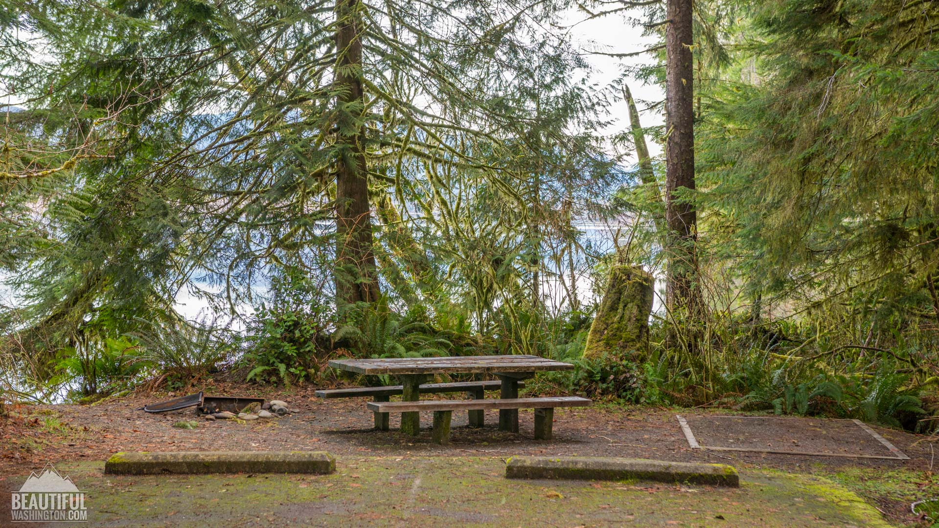 Willaby Campground at Lake Quinault area