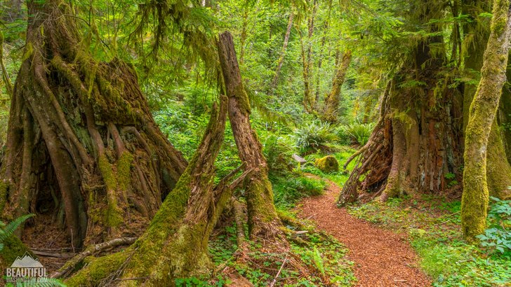 Photo of the Willapa Art Trail and the Cutthroat Climb Trail, located at Willapa National Wildlife Refuge, Pacific County