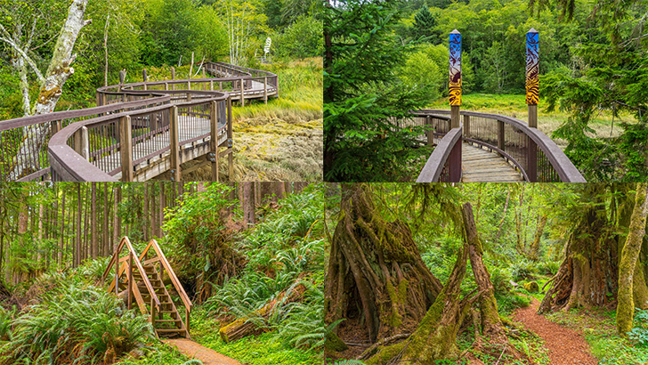 Willapa Art Trail and Cutthroat Climb Trail