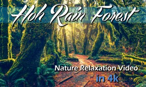 4K/HD Nature Relaxation Video: Hoh Rain Forest. Part 1 - 1 hour