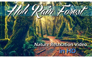 HD Nature Relaxation Video: Hoh Rain Forest