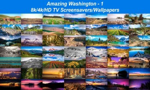 Amazing Washington 1