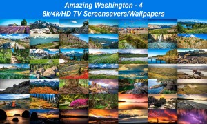 Amazing Washington 4