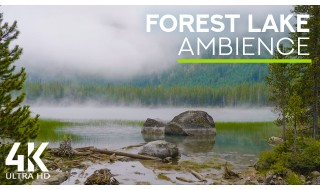 8 HOURS of Calming Lake Waves Sounds and Bird Chirping - 4K Mystic Atmosphere of a Forest Lake