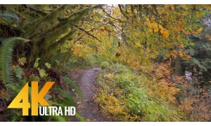 4K Nature Relaxing Views & Nature Sounds - Autumn Trail Walk - 2.5 HRS