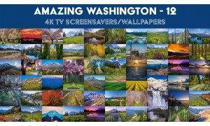 Amazing Washington 12