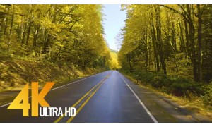 4K Scenic Drive Video - Autumn Road - 5 HRS