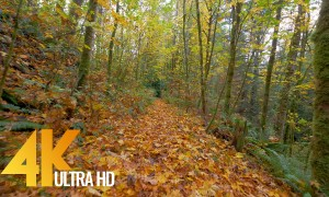Ultra HD Fall Nature Relax Video - Autumn Walk Trail. Episode 2