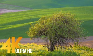 4K Nature Relax Footage of a Beautiful Tree with Nature Sounds - 1 HR