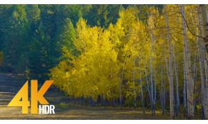 4K HDR/4K Nature Relax Video - Fall Foliage 1